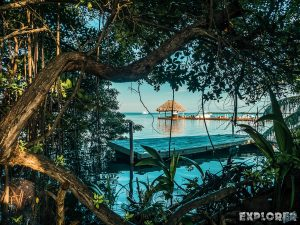 Belize Caye Caulker Pause Mangroves Backpacker Backpacking Travel
