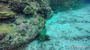 Belize Caye Caulker Scuba Diving Green Moray Eel Backpacker Backpacking Travel 2