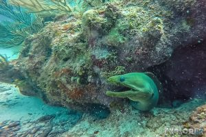 Belize Caye Caulker Scuba Diving Green Moray Eel Backpacker Backpacking Travel
