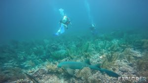 Belize Caye Caulker Scuba Diving Nurseshark Shark Backpacker Backpacking Travel
