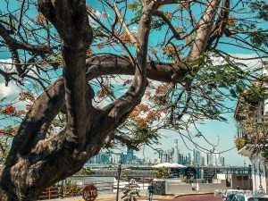Panama City Tree Skyline Backpacking Backpacker Travel