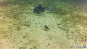 Panama Isla Coiba Scuba Diving Boxfish Backpacking Backpacker Travel