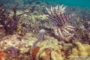 Panama Bocas Del Toro Scuba Diving Lionfish Divesite Pandora Backpacking Backpacker Travel