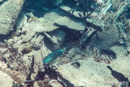 Panama San Blas Kuna Yala Isla Perro Dog Island Steamboat Wreck Snorkeling Backpacking Backpacker Travel
