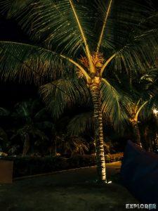 Indonesia Bali Kuta Palm Night Backpacking Backpacker Travel
