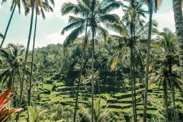 Indonesia Bali Tegalalang Rice Terraces Backpacking Backpacker Travel