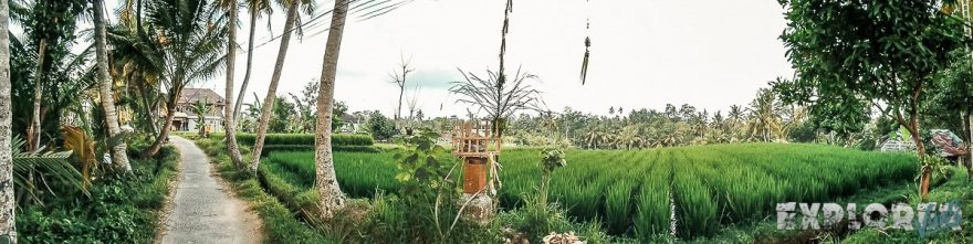 Indonesia Bali Ubud Ricefields Backpacking Backpacker Travel