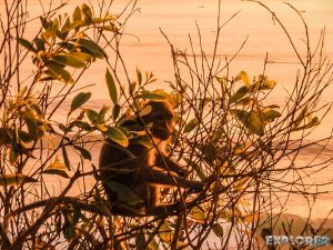 Indonesia Bali Uluwatu Sunset Monkey Backpacking Backpacker Travel