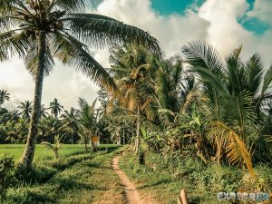 Indonesia Ubud Ricefields Backpacking Backpacker Travel