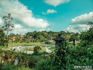 Indonesia Ubud Ricefields Pond Backpacking Backpacker Travel