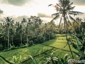 Indonesia Ubud Ricefields Sunset Backpacking Backpacker Travel