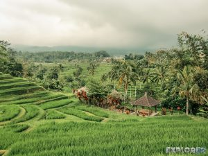 Indonesia Bali Jatiluwih Rice Terraces Backpacker Backpacking Travel