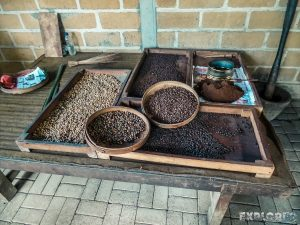 Indonesia Bali Kopi Luwak Coffee Backpacker Backpacking Travel