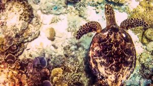 Indonesia Gili Trawangan Scuba Dive Turtle Backpacker Backpacking Travel