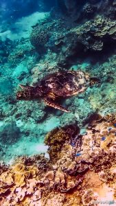 Indonesia Gili Trawangan Scuba Diving Turtle Backpacker Backpacking Travel