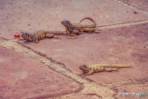 cuba trinidad lizards backpacker backpacking travel