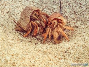 cuba trinidad playa ancon beach crabs backpacker backpacking travel