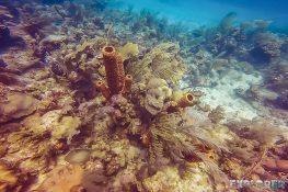 cuba trinidad playa ancon scuba diving backpacker backpacking travel