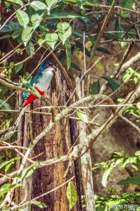 cuba vinales cuban trogon national bird backpacker backpacking travel