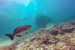 cuba varadero beach scuba dive caribe wreck backpacker backpacking travel
