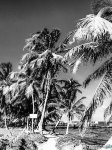 Belize Caye Caulker Palm Trees Backpacker Backpacking Travel