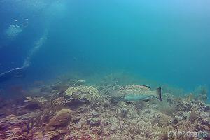 Belize Caye Caulker Scuba Diving Backpacker Backpacking Travel 6