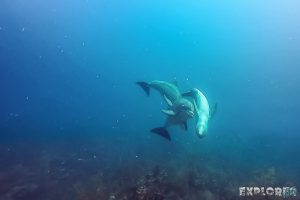 Belize Caye Caulker Scuba Diving Dolphins Backpacker Backpacking Travel 3