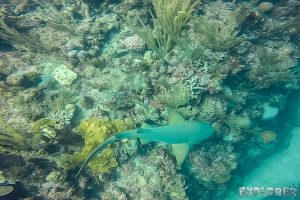 Belize Caye Caulker Scuba Diving Nurseshark Backpacker Backpacking Travel 5