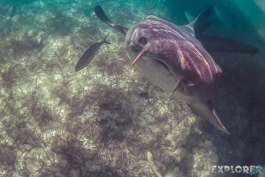 Belize Caye Caulker Snorkeling Nurseshark Backpacker Backpacking Travel