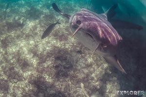 Belize Caye Caulker Snorkeling Nurseshark Backpacker Backpacking Travel