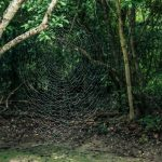 Guatemala Tikal Spider Backpacker Backpacking Travel
