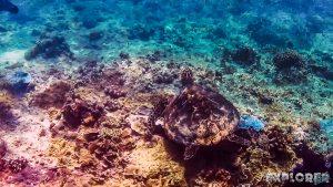 Indonesia Gili Meno Snorkel Backpacker Backpacking Travel 2