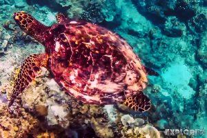 Indonesia Gili Meno Snorkel Backpacker Backpacking Travel 3