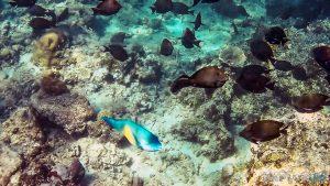 Indonesia Gili Meno Snorkel Backpacker Backpacking Travel