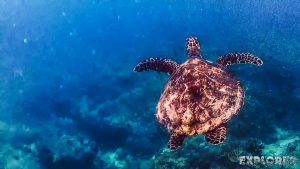 Indonesia Gili Trawangan Scuba Dive Turtle Backpacker Backpacking Travel 2