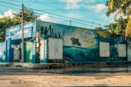 mexico tulum graffiti dolphins backpacking backpacker travel