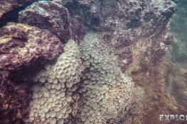 Ecuador Isabela Galapagos Snorkeling Anemone Las Tintoreras Backpacking Backpacker Travel