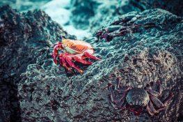 Ecuador Santa Cruz Galapagos Beach Crabs Backpacking Backpacker Travel