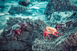 Ecuador Santa Cruz Galapagos Beach Crabs Backpacking Backpacker Travel