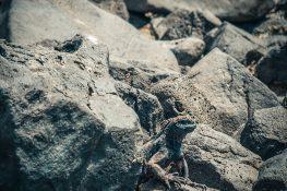 Ecuador Santa Cruz Galapagos Beach Iguana Backpacking Backpacker Travel