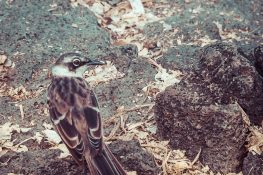 Ecuador Santa Cruz Galapagos Darwin Station Bird Backpacking Backpacker Travel