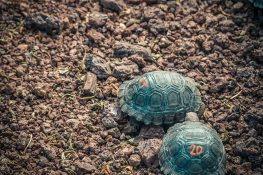 Ecuador Santa Cruz Galapagos Darwin Station Turtles Backpacking Backpacker Travel