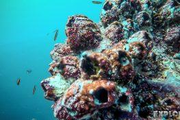 Ecuador Santa Cruz Galapagos Gordon Rocks Scuba Diving Fish Backpacking Backpacker Travel