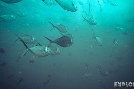 Ecuador Santa Cruz Galapagos Gordon Rocks Scuba Diving Jacks Backpacking Backpacker Travel