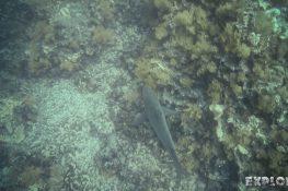 Ecuador Santa Cruz Galapagos Gordon Rocks Scuba Diving Shark Backpacking Backpacker Travel