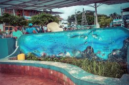 Ecuador Santa Cruz Galapagos Mural Backpacking Backpacker Travel