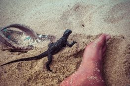 Ecuador Santa Cruz Galapagos Playa Alemanes Iguana Backpacking Backpacker Travel