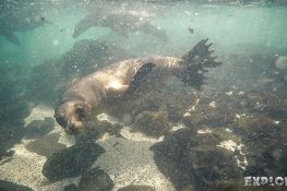 Ecuador Santa Cruz Galapagos Snorkeling Sealion Backpacking Backpacker Travel