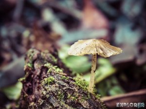 Ecuador Tena Jungle Mushrooms backpacker backpacking travel