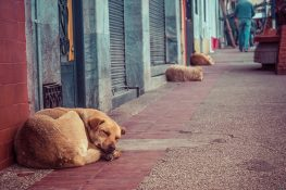 Equador Otavalo Market Dogs Sleeping Backpacking Backpacker Travel